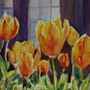 Orange Glow Tulips Poster
