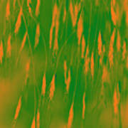 Orange Grass Spikes Poster
