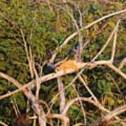 Orange Iguana  Poster