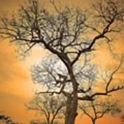 Orange Leopard Poster