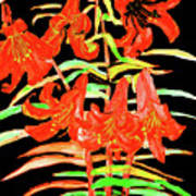 Orange Lilies, Hand Drawn Painting Poster