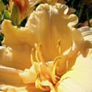 Orange Lily Flower Floral Art Prints Baslee Troutman Poster