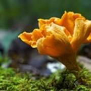 Orange Mushroom Flower On The Forest Floor Poster