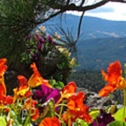 Orange Nasturtium Against Mountains Poster
