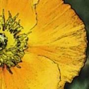 Orange Oriental Poppy Poster