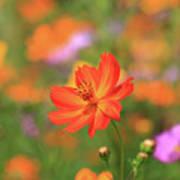 Orange Painted Landscape Poster
