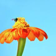 Orange Pop Flower Cafe Poster