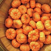 Orange Pumpkins Autumn Background. Poster