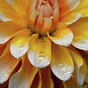 Orange Rain Poster