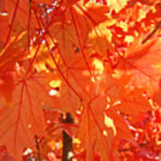 Orange Red Fall Leaves Autumn Tree Art Baslee Troutman Poster