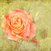 Orange Rose With Old Paint Texture Background Poster
