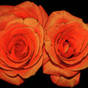 Orange Roses With Hot Wax Effects Poster