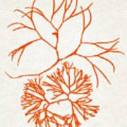 Orange Seaweed Marine Art Furcellaria Fastigiata Poster