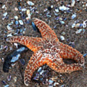 Orange Starfish Poster