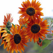 Orange Sunflower 1 Poster