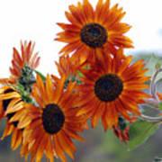 Orange Sunflower 1 Poster