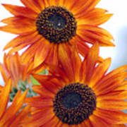Orange Sunflower 2 Poster