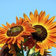 Orange Sunflowers Summer Blue Sky Art Prints Baslee Poster