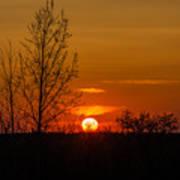 Orange Sunset Through The Trees Poster