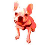 Orange Terrier Poster