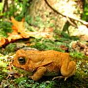 Orange Toad Poster