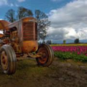 Orange Tractor At Tulip Field Poster