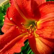 Orange Trumpeting Lily Poster