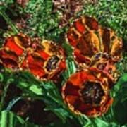 Orange Tulip Chrome Poster