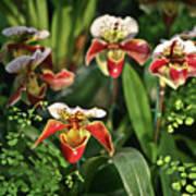 Orange White Orchid Poster