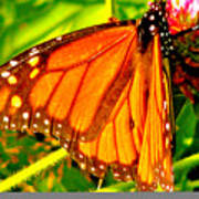 Orange Winged Butterfly Poster