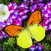Orange Yellow Wings Poster