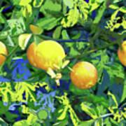 Oranges On Vine IIi Poster