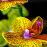 Orchid-0022 Poster