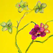 Orchid And Amarillo Poster