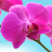 Orchid At The Ocean Closeup Poster