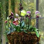 Orchid Basket Poster