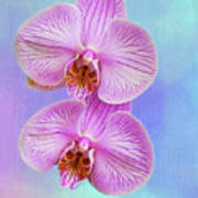 Orchid Delight - Two Blooms Against A Rainbow Background Poster