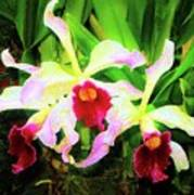 Orchid Flowers Color 1 Poster