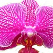 Orchid I Pretty Poster