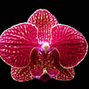 Orchid On Black 2 Poster