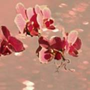 Orchid Petals In Pink Poster