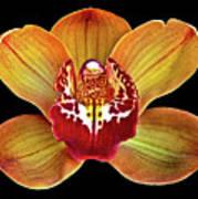 Orchid Splendor Poster