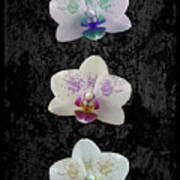 Orchid Trio Poster