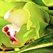 Orchid With Yellow And Green 2 Poster