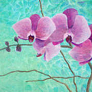 Orchids In Pink Poster