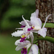 Orchids On A Tree Poster