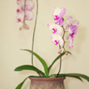 Orchids On Sideboard Poster