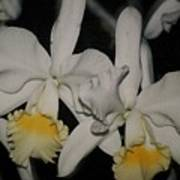 Orchids Satin Poster