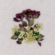 Oregano Florets And Leaves Pressed Flower Design Poster
