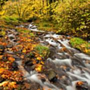 Oregon Autumn Beauty Poster